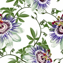 Passionflower tropical flowers and fruit. Passiflora seamless pattern on the white backgroung.