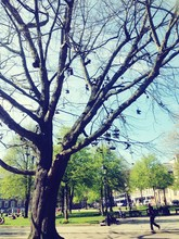 Shoes Hanging From Bare Tree In Park
