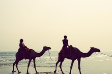 People Riding On Camel At Beach Against Clear Sky
