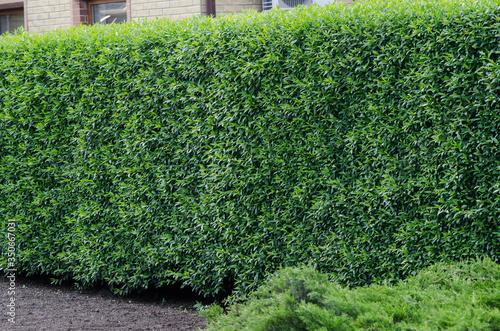 Obraz na plátne trimmed bush background