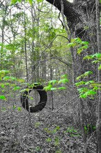View Of Tire Swing Hanging On Tree