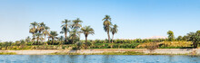 Scenic View Of Palm Trees On R...