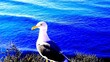 canvas print picture - Close-up Of Seagull
