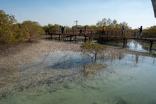 Mangrove Forests 9 UAE