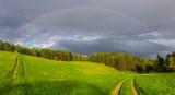 Fototapeta Tęcza - Tęcza nad lasem