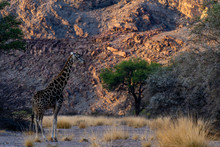 A Giraffe At Sunset In A Canyo...