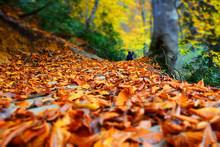 Fallen Leaves On Tree Trunk