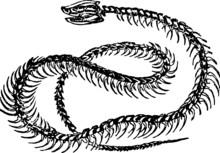 Old Drawing Of A Snake Skeleton
