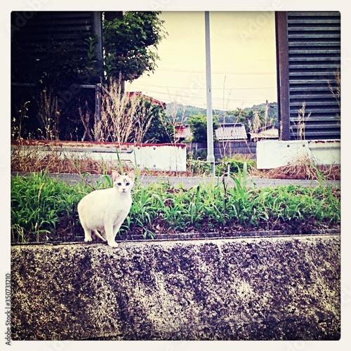 Photo Alert Cat Siting On Retaining Wall