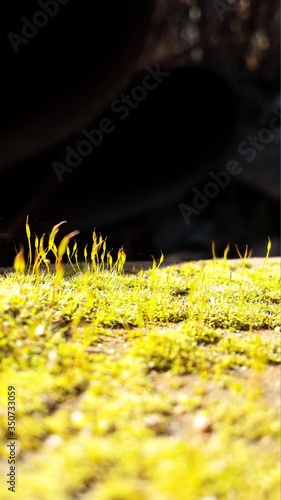 Macro Shot Of Grassy Field