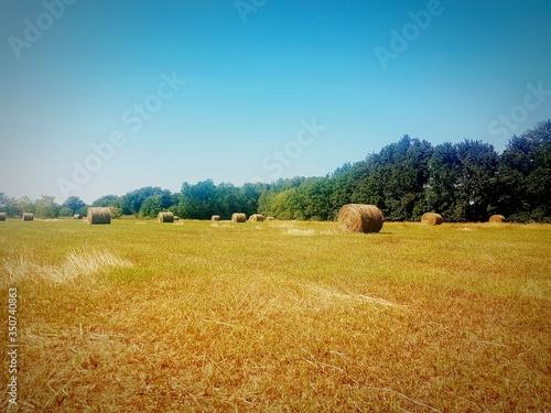 Hay Bales On Landscape Against Clear Blue Sky Fototapet