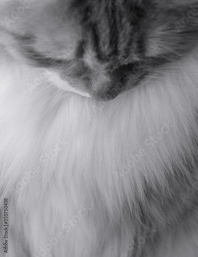 Close-up Of Cat Outdoors Fototapeta