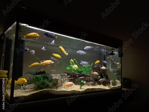 Foto Close-up Of Fish Swimming In Aquarium At Home