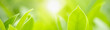 Leinwandbild Motiv Closeup beautiful attractive nature view of green leaf on blurred greenery background in garden with copy space using as background natural green plants landscape, ecology, fresh cover concept.