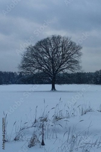 Fototapety, obrazy: Bare Tree On Snow Covered Landscape