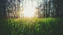 Sun Shining Through Trees On G...