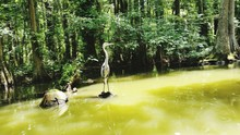 Great Blue Heron In Lake Again...