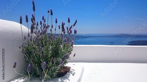 Fototapeta Plant By Sea Against Clear Blue Sky At Santorini obraz