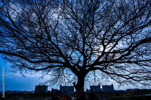 Photo 樹木のシルエットと空(多摩川)
