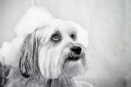 Photo Dog In Bathtub