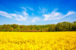 Leinwandbild Motiv Rape Field & Colors Of Spring