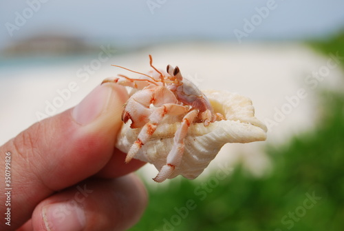 Fotografie, Obraz Cropped Hand Holding Hermit Crab At Beach