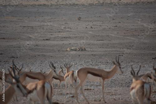 Antelopes In Savannah Wallpaper Mural