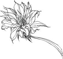 Vector Hand Drawn Realistic Bi...