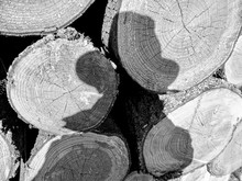 Full Frame Shot Of Woodpile With Shadow Of Man