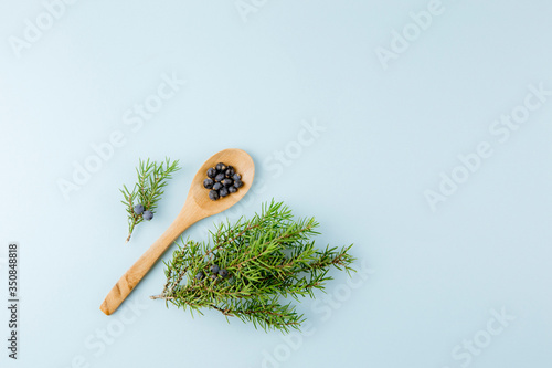 Fototapeta Top view of Juniper latin Juniperus communis berries on wooden spoon, juniper tree branch with confier cones and berries scattered around, lot of copy space. Minimalist blue color background. obraz