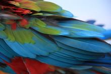 Multicolored Marcos Parrots Ar...