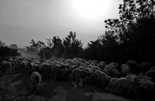 Art Photo: Herding More Than 1...