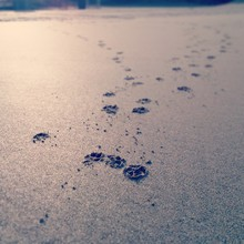High Angle View Of Paw Prints On Wet Sand