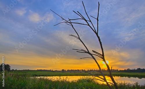 Fototapeta Zachód słońca pierwszy plan gałąź obraz