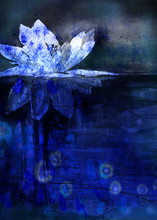Stylized Water Lily On Dark Bl...