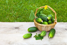Freshly Picked Green Juicy Cucumbers And A Sprig With Cucumber Leaves In A Wicker Basket On A Wooden Table Against The Background Of A Green Lawn On A Summer Day. Organic Healthy Foods