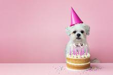 Cute White Dog With Birthday C...