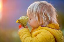 Little Child, Boy Holding Popp...