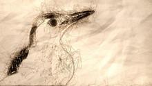 Sketch Of The Profile Of Curio...