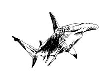 Graphical Hand-drawn Shark Iso...