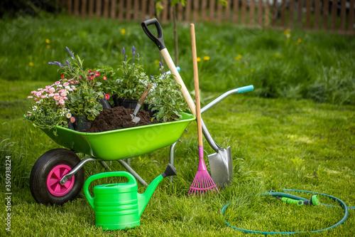 Fotografie, Obraz Wheelbarrow with gardening tools in the garden