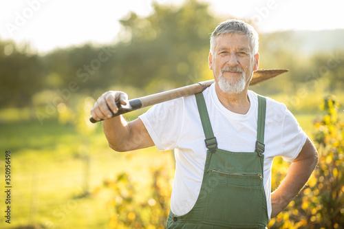 Canvastavla Senior gardener gardening in his permaculture garden - holding a spade