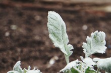 Close-up Of Fresh Green Leaf O...