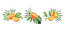 Watercolor Orange Fruits. Set ...