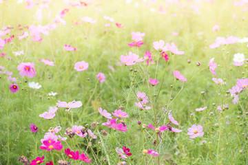 Obraz na płótnie Canvas View Of Wildflowers