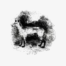 Mountain Fox Vintage Drawing