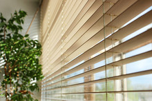 Bamboo Blinds And Green Plant On The Window With Sunshine