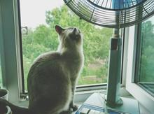 Cat By Electric Fan On Window ...