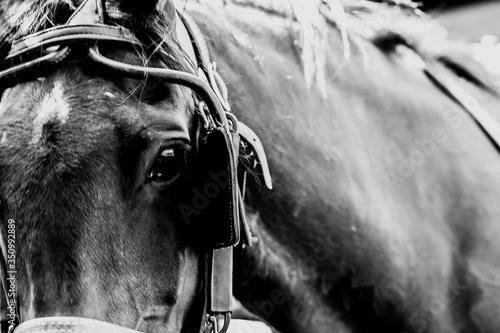 Fototapeta Close-up Of Horse obraz na płótnie