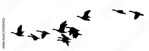 Obraz na płótnie Panoramic View Of Geese Flying In Clear Sky